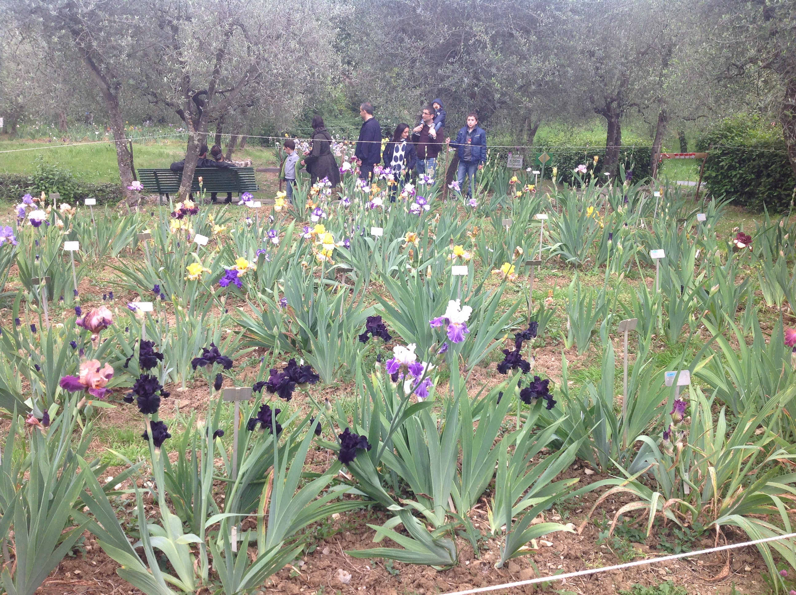 The garden of iris in florence florence guided tours by fantastic the garden of iris florence izmirmasajfo Gallery